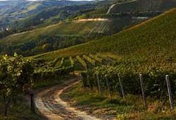 Lebanese vineyards