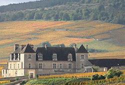 Burgundy 2015 reds