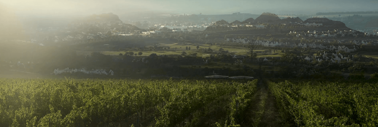 Kleine Zalze Vineyards